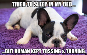 funny-dog-meme-tried-to-sleep-in-my-bed-but-human-kept-tossing-_-turning